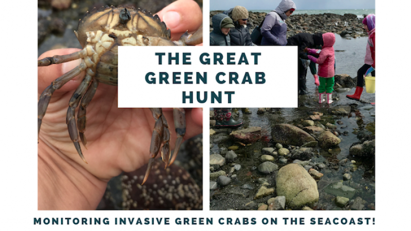 Event poster with hand holding a green crab and kids playing in tidal pools