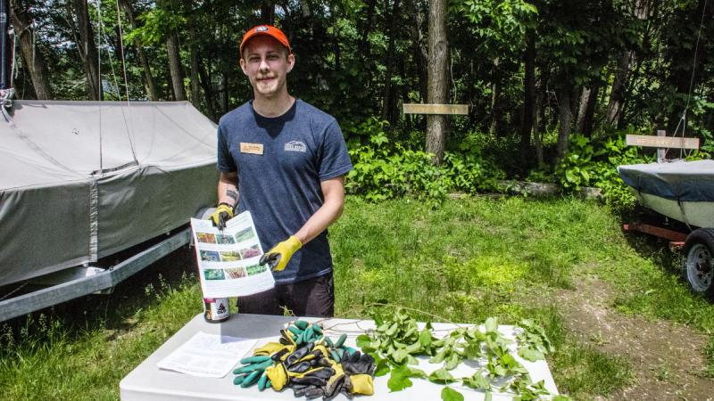Terrestiral Invasive Plant Volunteer