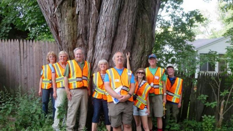 NH big tree volunteers