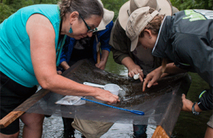 volunteers standing in a stream looking at a net of macroinvertebrates