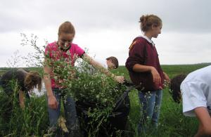 Volunteers pull invasives