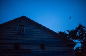 Bat Flying Over Barn