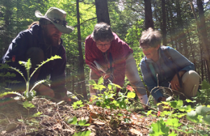 Garlic Mustard Volunteers