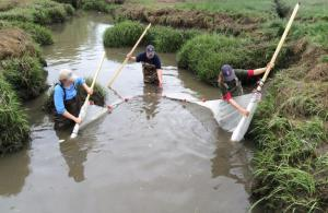 Volunteers using a stream net