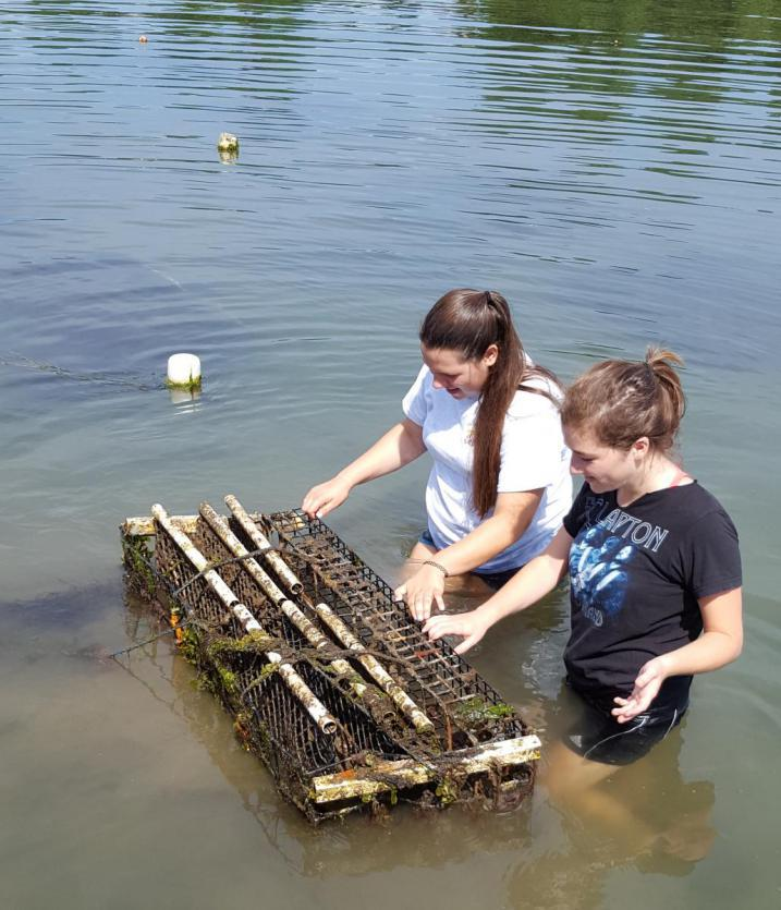 volunteers clearing sediment and growth off a rack holding bags of baby oysters