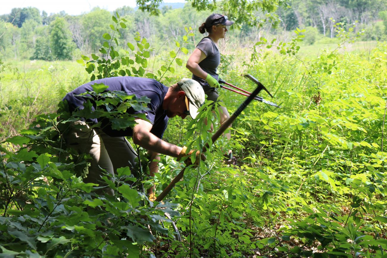 Oyster River Forest Field Work Interns