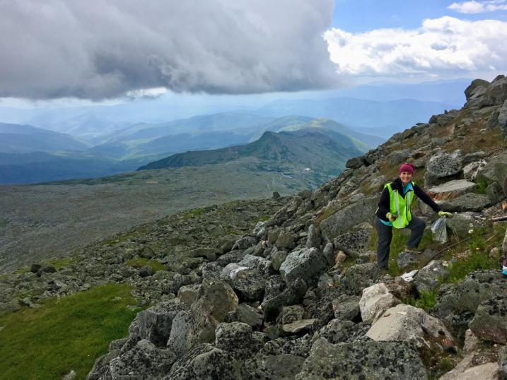 Volunteer pulling dandelions on the side of Mt. Washington