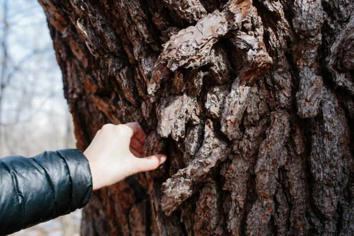 hand touching tree bark