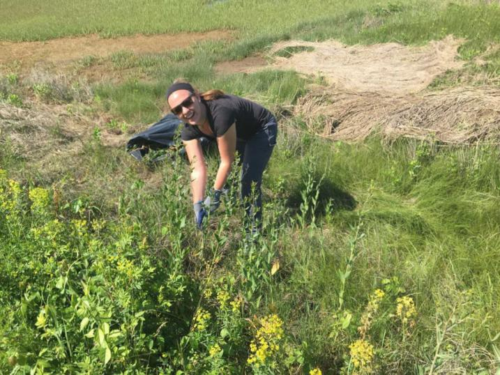 Morgan pulling pepperweed