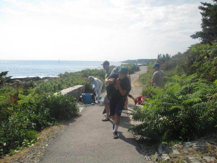 volunteers carrying invasives
