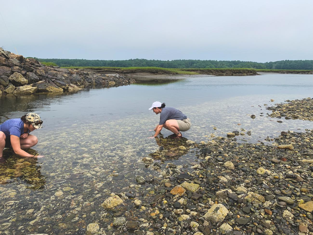 Volunteers hunt for invasive green crabs in Hampton