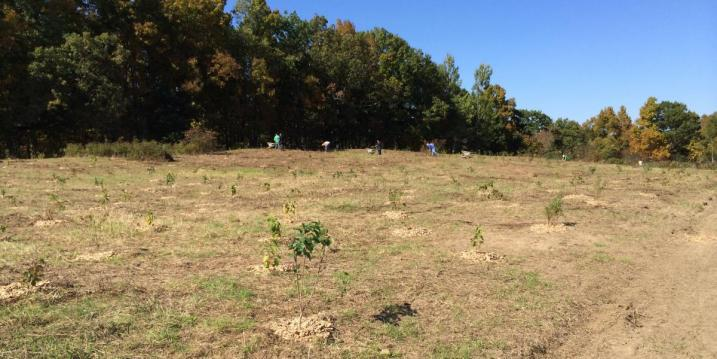 Crew planting 2,400 native shrubs at the Oyster River Forest.