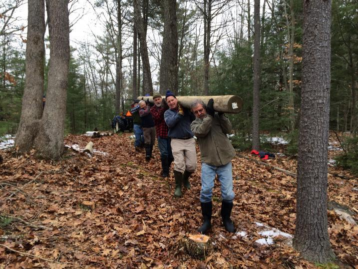 volunteers carry 20ft long pine pole