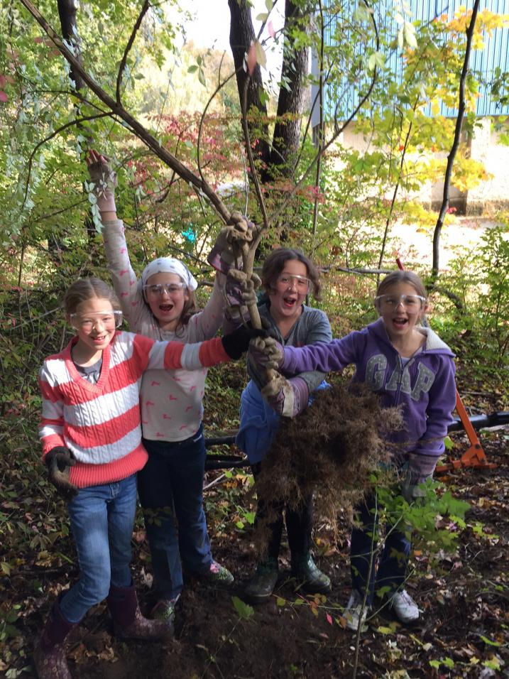 Students pulling invasive plants