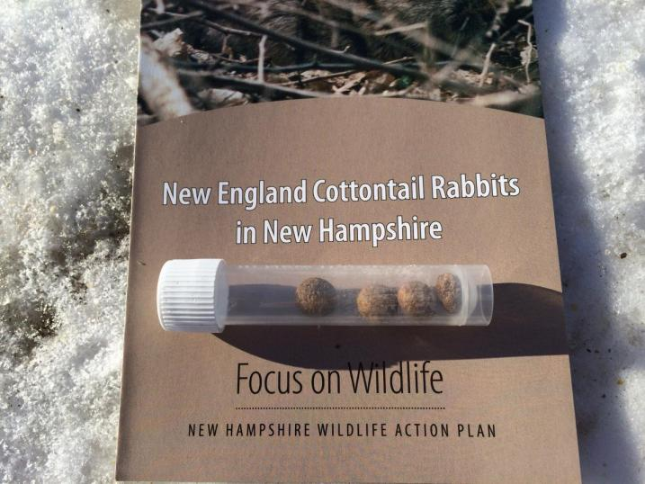 New Hampshire Wildlife Action Brochure  for Cottontail Rabbits