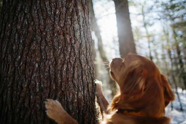 dog with paws on tree bark