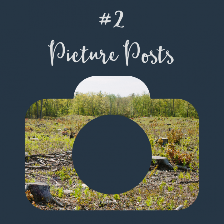 #2 Picture Posts