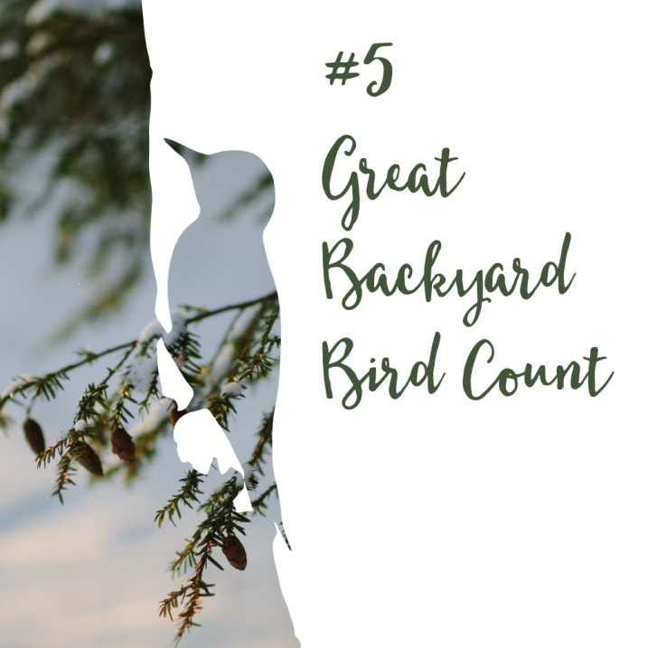 #5 Great Backyard Bird Count