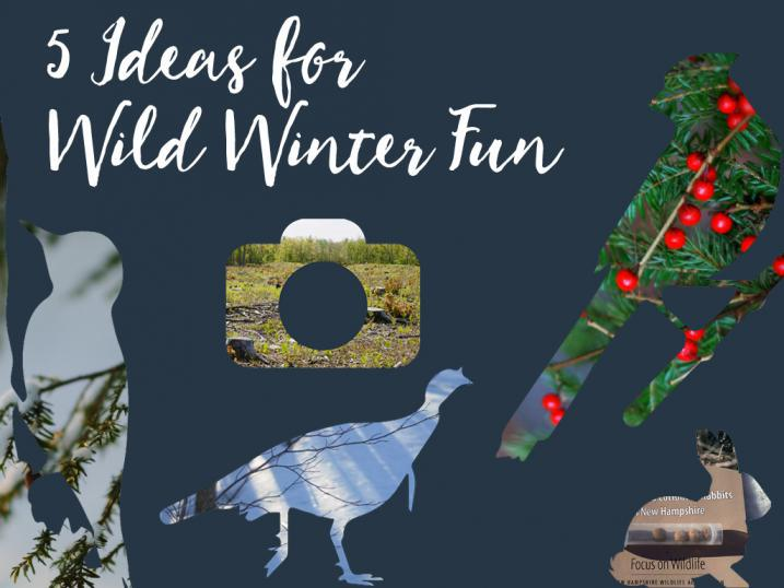 Icon for 5 Ideas for Winter Family Fun