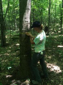 Jo Lewis measuring trees in College Woods