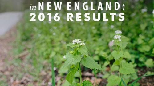 2016 Garlic Mustard Challenge New England topic slide